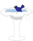 ۲۹. آبتنی پرندگان